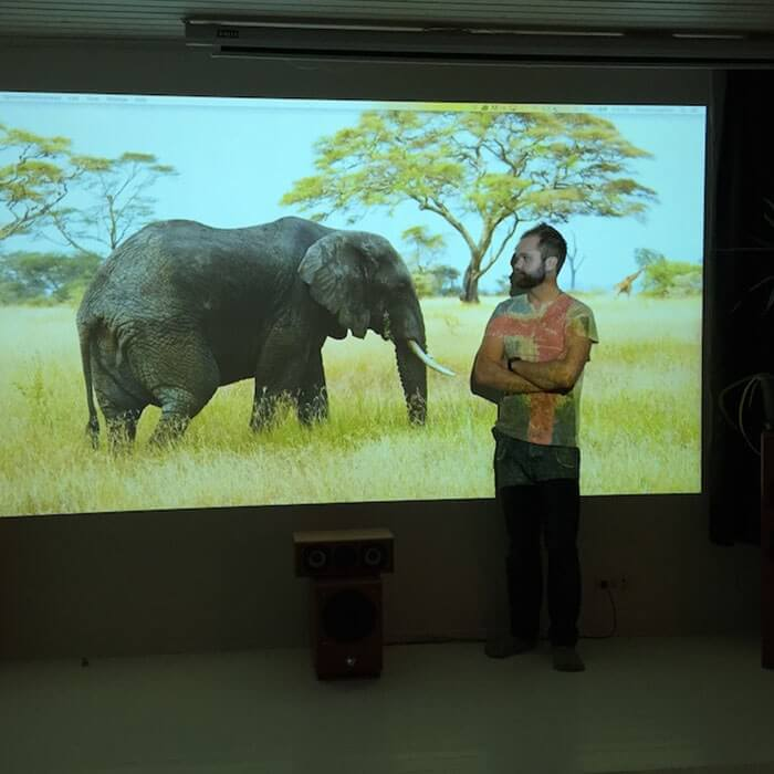 image of elephant projected on office walls